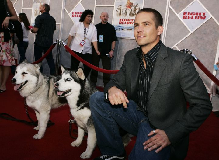 """Paul takes a moment to pose with his four-legged co-stars at the """"Eight Below"""" premiere in 2006."""