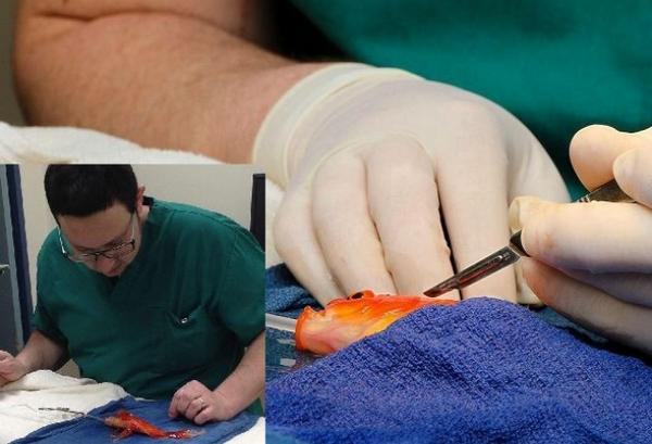 "What Did You Do Today? Doctor: ""Oh Nothing, Just Performed Major Surgery On A Gold Fish."""