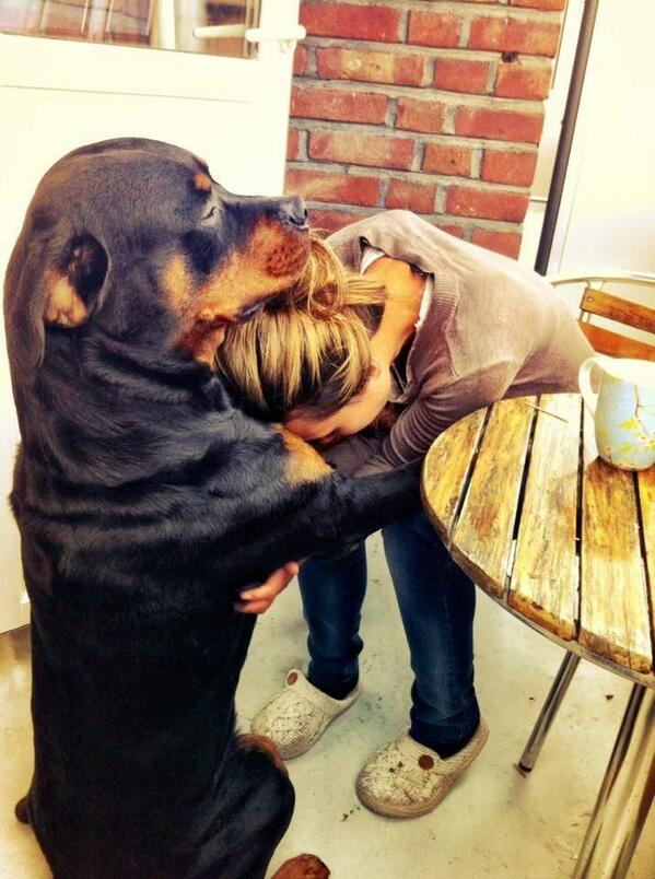 Ever Been Consoled By Your Rottweiler?