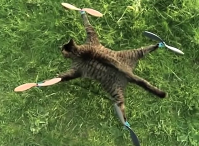 Copter Cat: A Dutch artist stuffed his dead cat's body and turned it into a remote-controlled helicopter. Yeah.