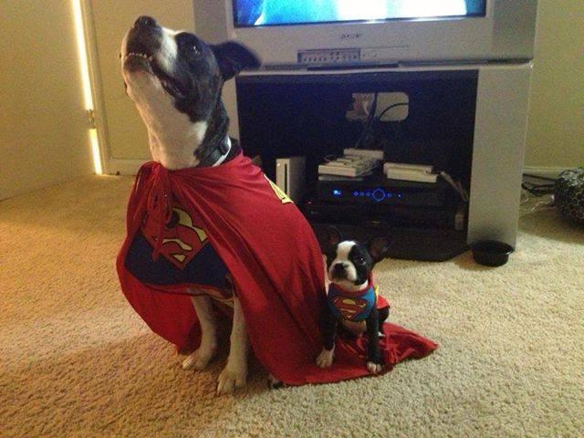 Superman and his trusty sidekick.