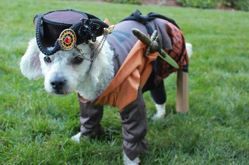 This 3-legged dog won our hearts as a Pirate.