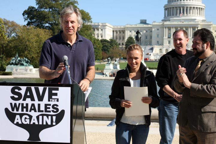 Spokesperson Hayden Panettiere at a conference for her Save the Whales campaign.