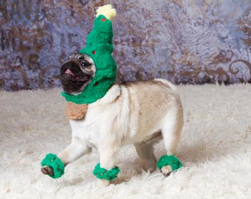 Tree Pug