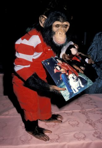 Michael Jackson's Chimpanze Bubbles