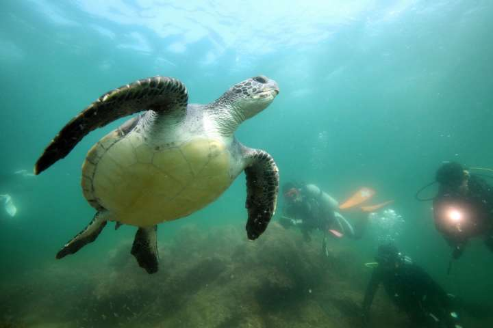 "In addition to the shell we can easily see, turtles also have a lower shell called ""plastron."""