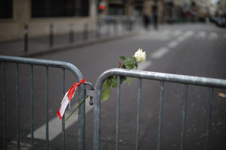 A single rose following multiple terror attacks in the French city of Paris.