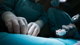 Close up of surgeons using cotton swab on a surgery.