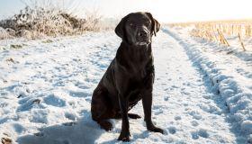 Dog Sitting In Snow