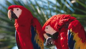 two colorful parrots are sitting on the branch of a palm tree