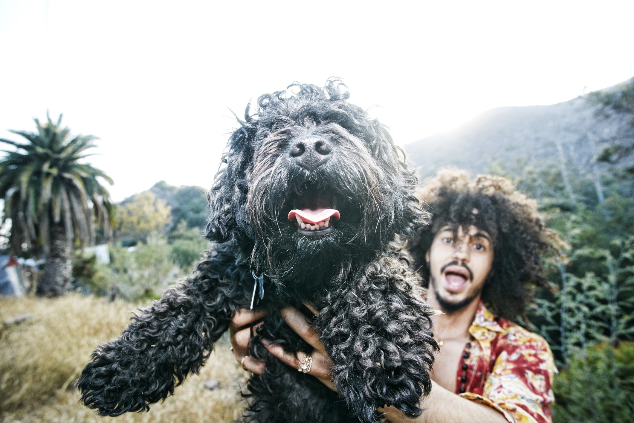 Mixed Race man holding shaggy dog