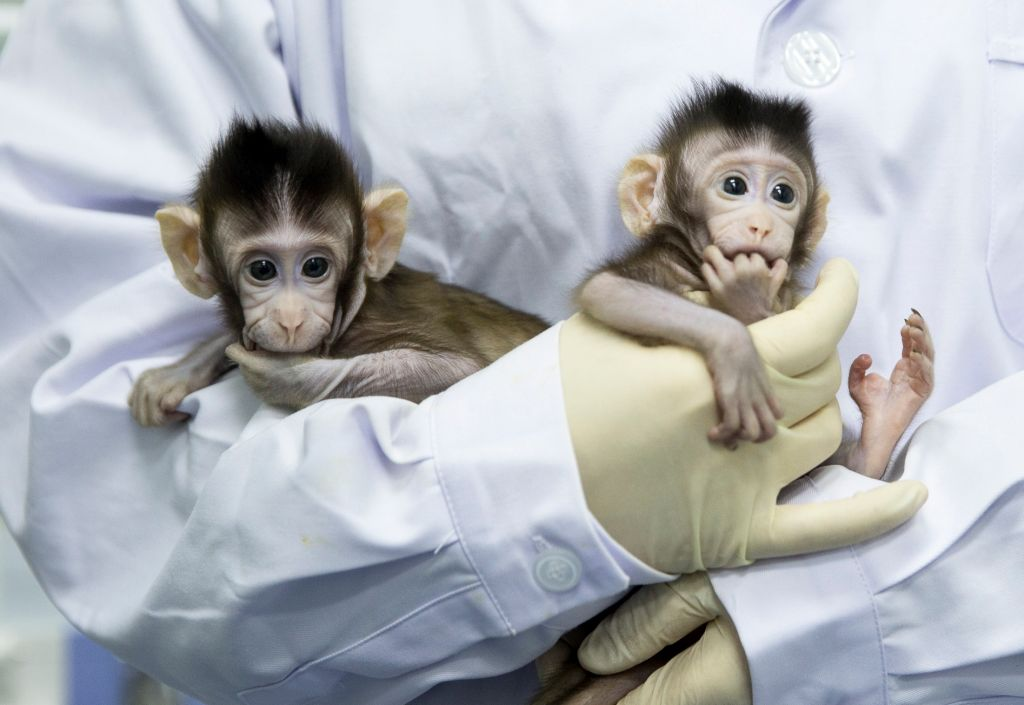 CHINA-BEIJING-CLONED MACAQUES-SUCCESS (CN)
