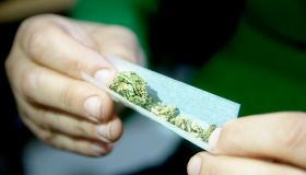 Female hands rolling a marijuana joint