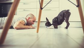 Playful dog and her owner on the floor