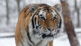 Winter at the Bronx Zoo