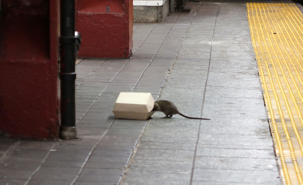 Rat in a New York City Subway Station