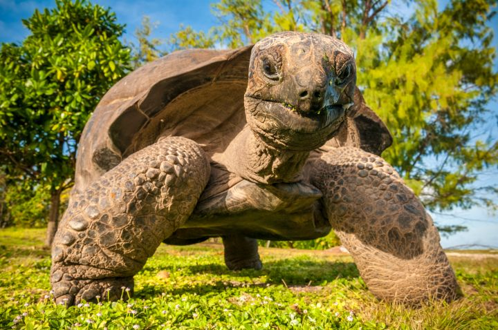 Some turtles can hide their heads in their shells when predators attack—but not all turtle species have this trick up their sleeves.