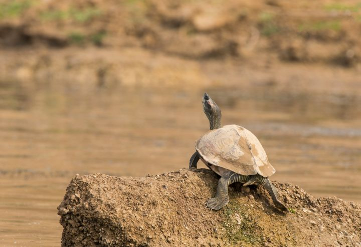 A turtle's shell is a part of its skeleton. Their shells are made up of over 50 bones.