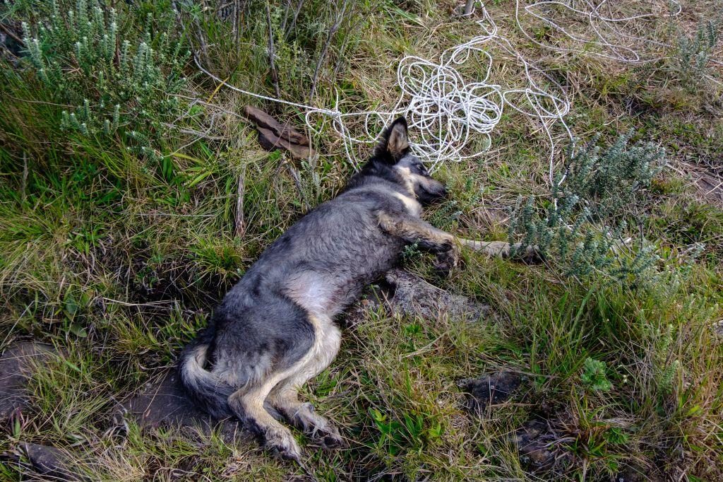 Dog at Espraiado Canyon