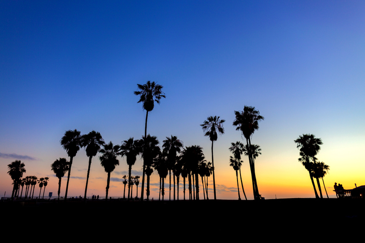 Palm tree silhouettes against the sky at sunset in Venice Beach, California