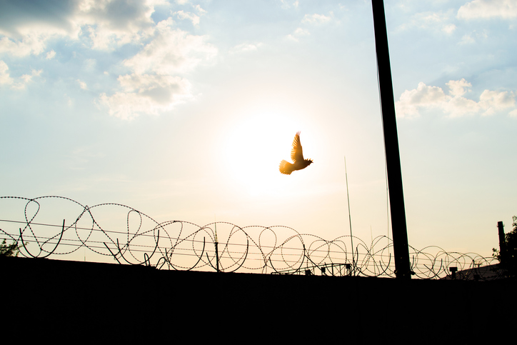 Low Angle View Of Bird And Silhouette Fence Against Sky During Sunset